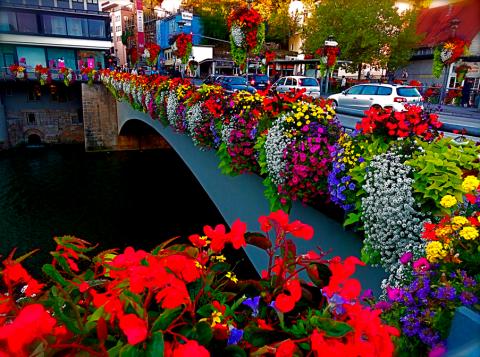Blumenpracht an der Eberhardsbrücke Tübingen