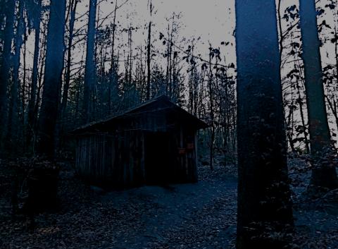 Im Wald von Ludwigshöhe bei Ebersberg