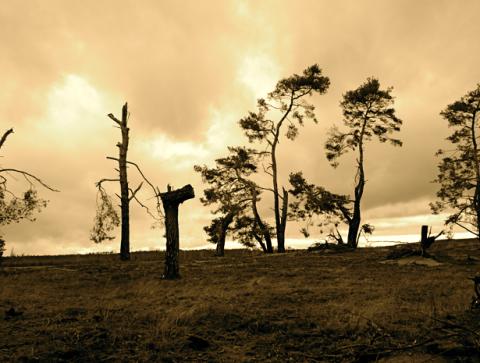 Sturmschäden im Landschaftsschutzgebiet Alzenauer Sande
