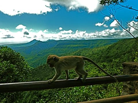Black River Gorges Nationalpark