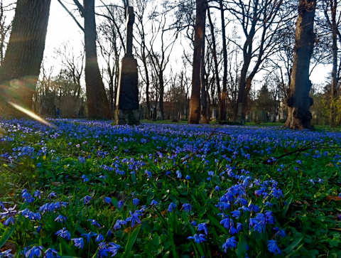 Alter Nordfriedhof im Frühling