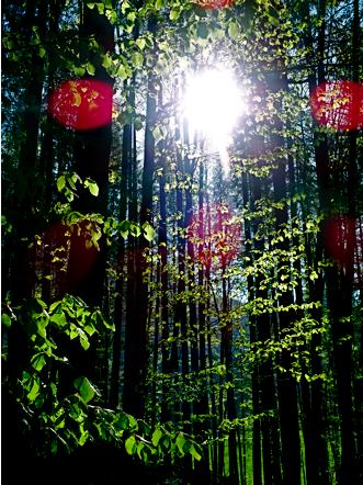 Wald unterm Rauschberg
