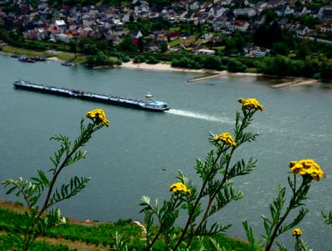 Blick vom Rheinsteig
