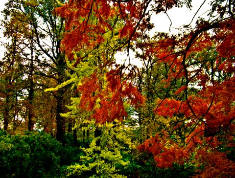 Herbstlicher Kruppwald auf privatestem Privatbesitz