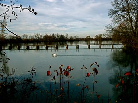 An den alten Fischerteichen des Teichgut Birkenhof  bei Ismaning
