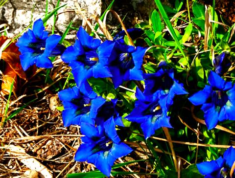 Frühlingsflora am Wendelstein