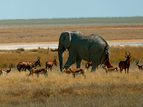 Panorama im Etosha Nationalpark