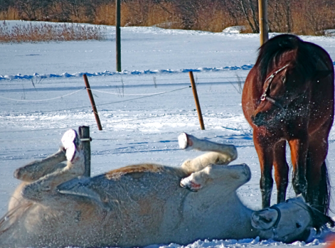 Oberammergau Pferderanch Horsebackriding