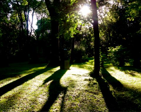 Alter Nordfriedhof Maxvorstadt