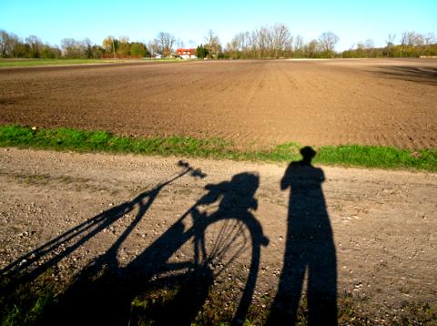 Schatten im Feld beim Ismaninger Kanal