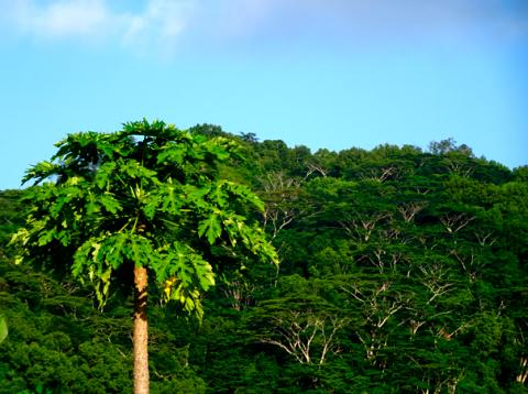 Die Flora auf Süd-Mahé