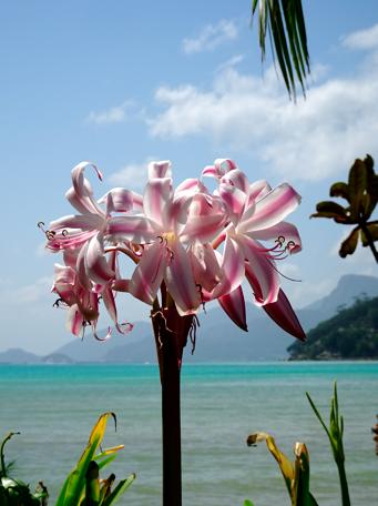 Die Gärten auf Süd-Mahé