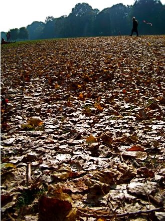 Am Eisbachufer im Herbst