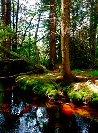 Am Kreuzotternpfad im Bayrischen Wald bei Riedlhütte