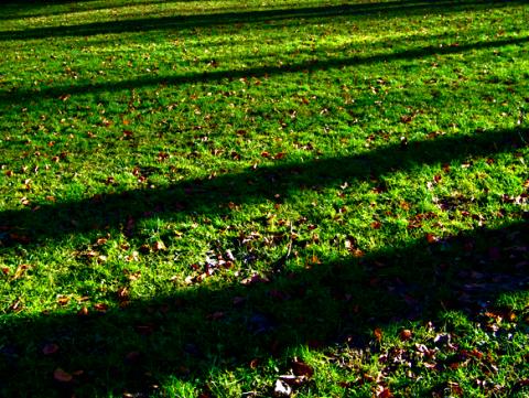 Schatten im Englischen Garten