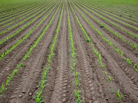 Felder um die Sempt bei Erding