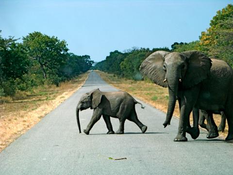 Wildwechsel in Botswana