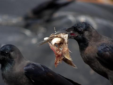 Am Fischmarkt von Negombo
