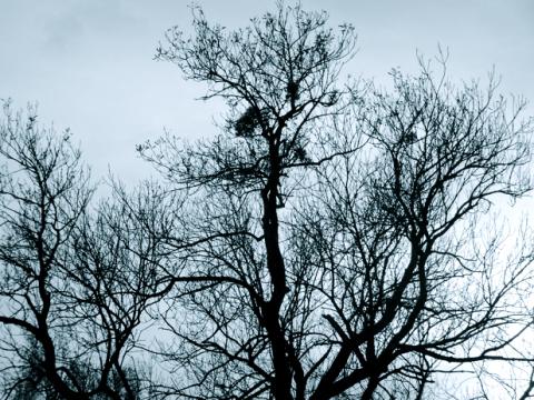 Baumkronen im Nordteil des Englischen Gartens