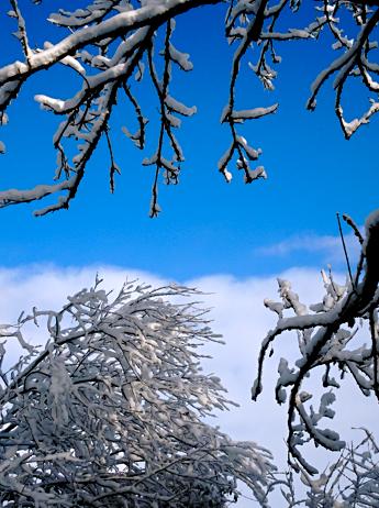 Auf dem verschneiten Moorweg 1 in Benediktbeuern