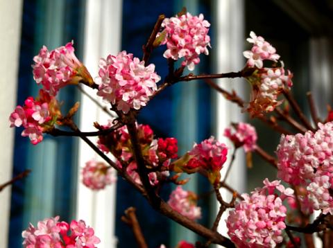 Frühlingsvorboten im Februar