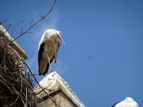 Storchennest in der Medina von Fes