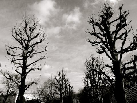 Im Wiener Hofgarten