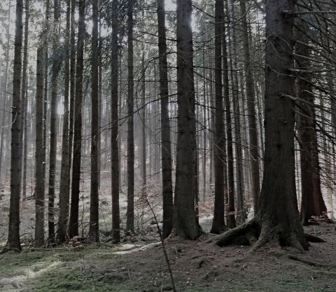 Wald Marienbad