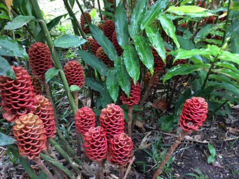 Jardín Botaníco Lankaster